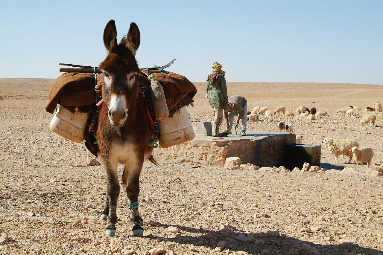 donkey-534906_1280